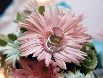 Wedding rings on pink daisy.